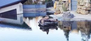 sealions dublin zoo water treatment